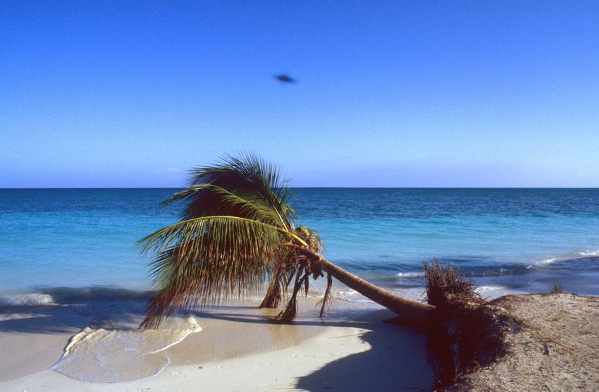 UFO Caribbean Caribbean Sea Fallen Tree Fallen Palm Tree Sea Horizon Over Water Beach Nature Water Sand Blue Scenics Clear Sky Beauty In Nature Sky Tranquil Scene Tranquility Day Outdoors No People