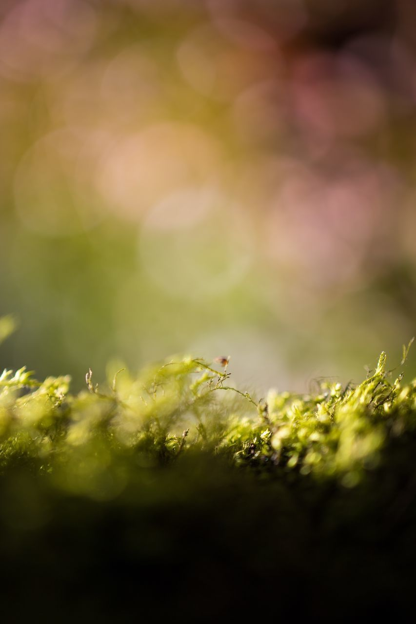 selective focus, green color, close-up, growth, no people, plant, nature, beauty in nature, day, outdoors, tranquility, freshness, macro, sunlight, leaf, beginnings, food and drink, plant part, food, extreme close-up