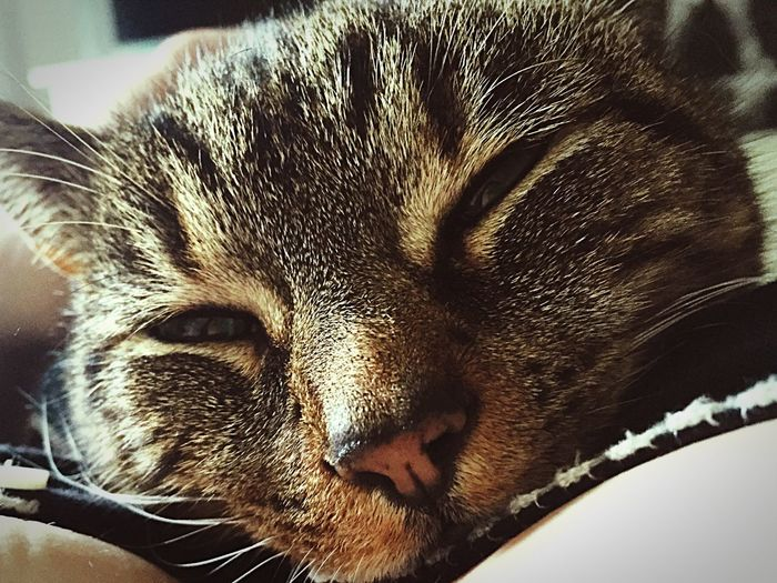 Relaxing Taking Photos Cuddles Cute Cats Goodmorning Cutecats Cute Pets Taking Photos Relaxing Cat