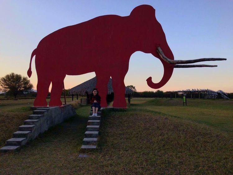 Elefante  Atardecer Monterrey Nuevo Leon ! Bioparque Estrella
