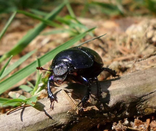 Macro Nature Bugs