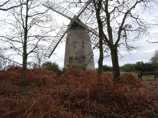 Windmill Built Structure Nature Tranquility Autumn Day No People Sky Trees Tranquil Scene