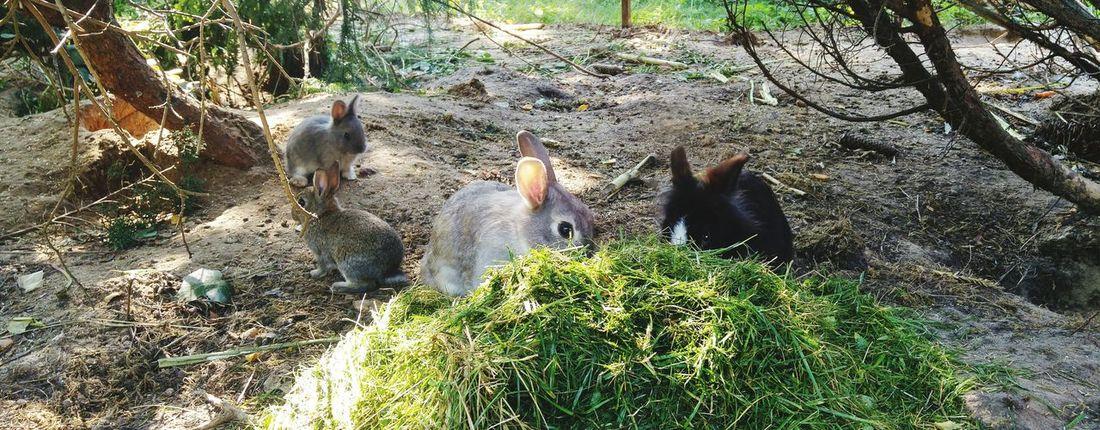 Hasenglück Hasenbabys Rasen