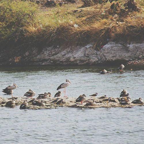 Another picture from the road trip folder. Roadtrip Gujarat Throwback Birds Nature NoVSCO NoRAW Photooftheday Mumbaiigers Igersnavimumbai Mumbaibizarre Mumbaiphotographers Fadedfeatures Faded NotThrowbackThursday
