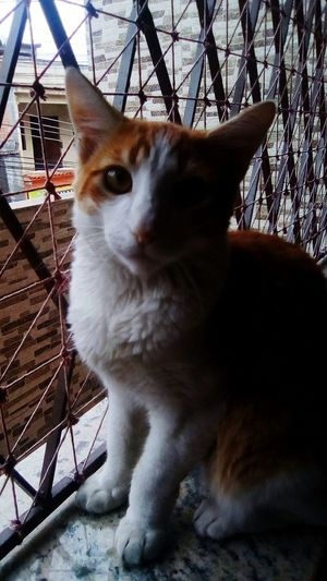 Pets Domestic Cat Domestic Animals Animal Themes One Animal Mammal No People Feline Looking At Camera Portrait Sitting Day Close-up Outdoors Cat