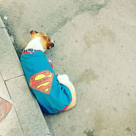 Izmir Superdog Alsancak EyeEm Best Shots EyeEm