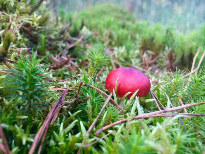Close-up of apple on grass