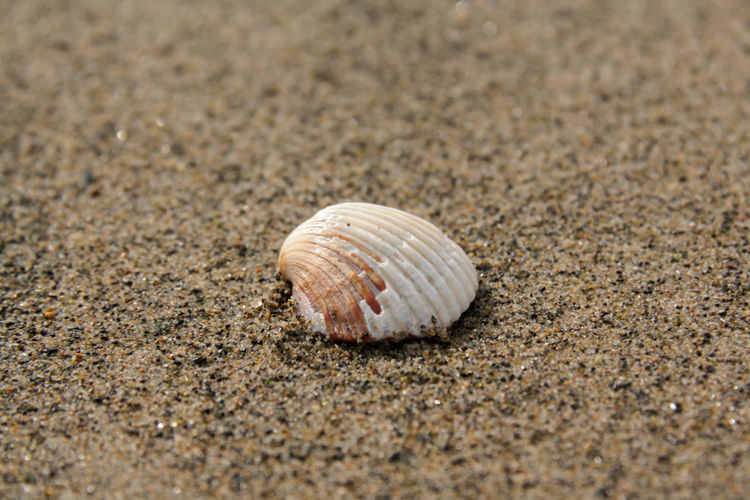 Close-up of shell on sand