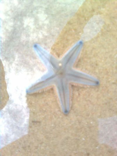 Eyem Fish Eyem Gallery Water Life Water Animal Starfish At Beach Beach Starfish  Resting Near Sea Shore