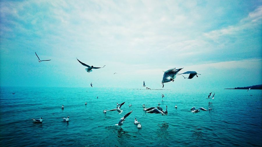 View of birds in calm sea