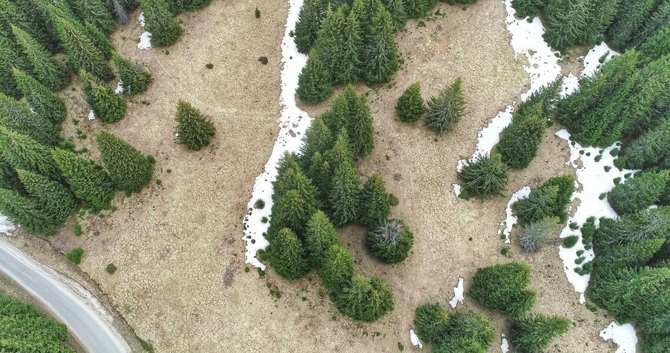 Aerial Photography Picea Abies River Aerial View Aerial Shot Summer Exploratorium Beach Sand High Angle View Close-up Full Frame Field