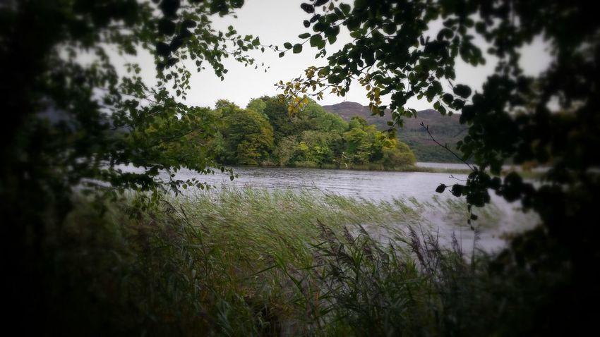 Tree Nature The Week On EyeEm Beauty In Nature Hazelwood Outdoors Lake Island