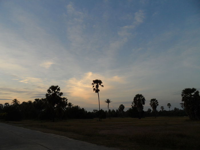 Tree Cloud - Sky Sky Sunset Palm Tree No People Landscape Beauty In Nature Nature Outdoors Grass Day