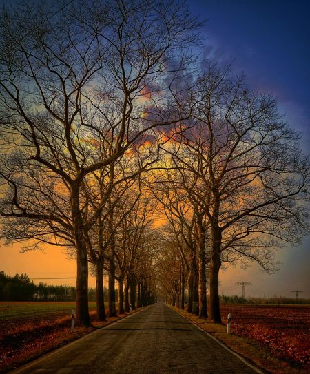 Road amidst bare trees on field during sunset