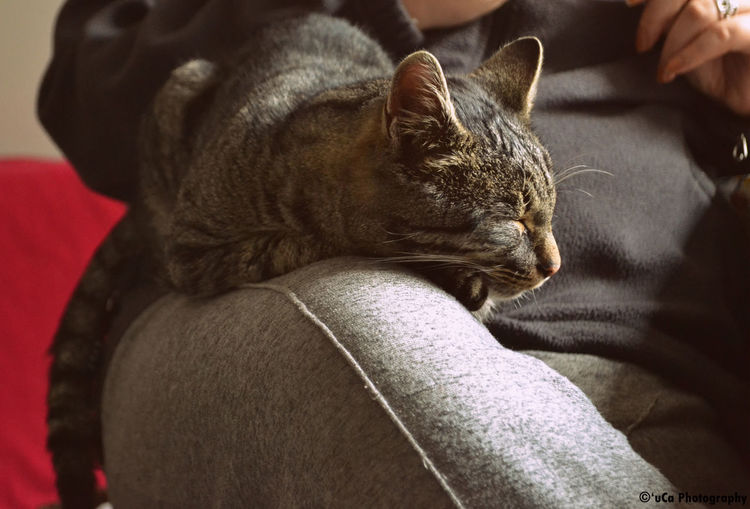 Just Wensday Cat Lovers Lazy Kitty Kitty!  •(=^. ^=)• How can u not love him <3 :3 Cat♡