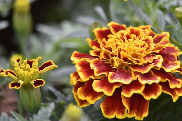 Nature Yellow
