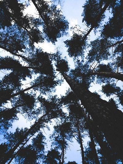 Мещерский лес.