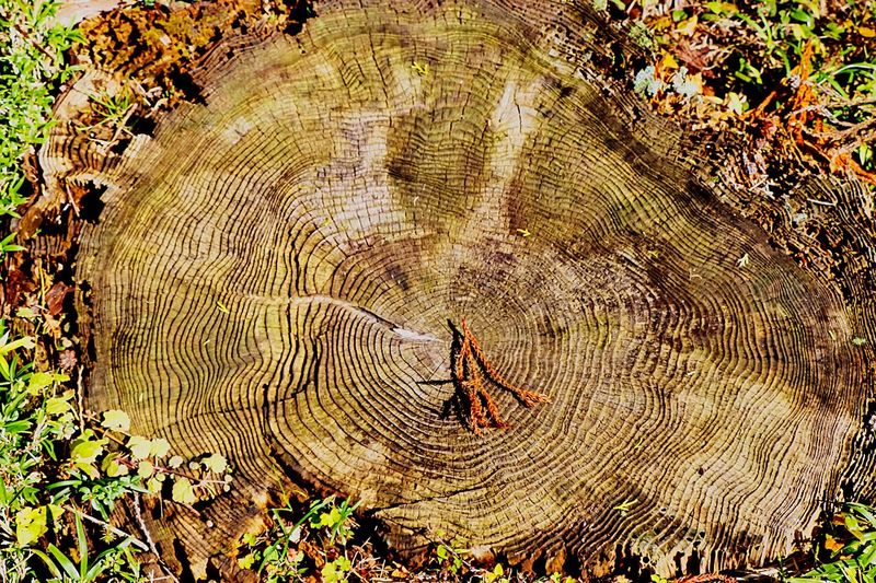 Tree Trunk Annual Ring Annualpassholder Rings Annual Tree Rings Hugging A Tree TreePorn Nature From My Point Of View Tree_collection  EyeEm Best Edits EyeEm Nature Lover Trunk Detail Nature's Art - Tree Trunk