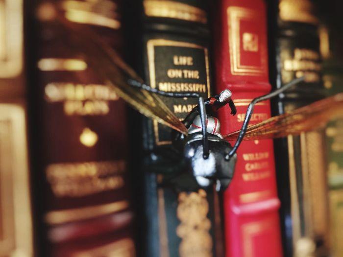 Marvel Antman Ant-thony Hottoys Books Explore Adventure Toys Actionfigures Toyphotography