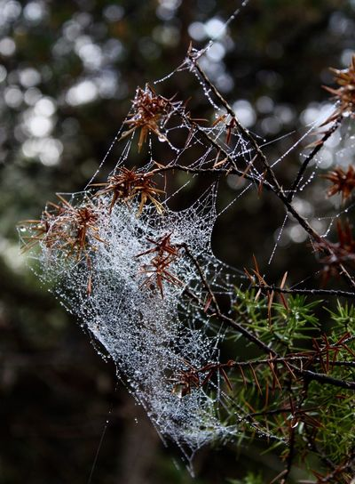 Drop Spider Web Water Nature Outdoors Beauty In Nature EyeEmNewHere The Great Outdoors - 2018 EyeEm Awards