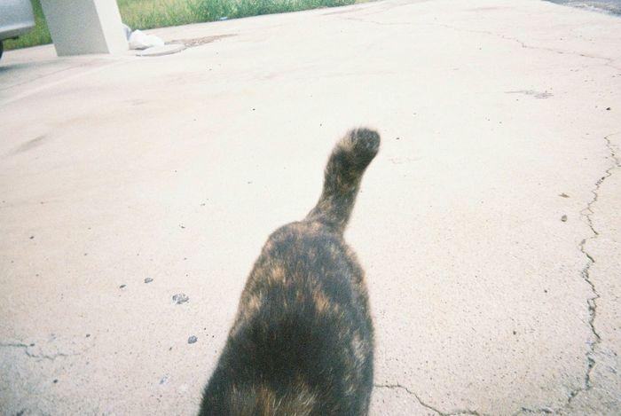 Cat Meow🐱 고양이좋아해? 고양이 꼬리 Tail