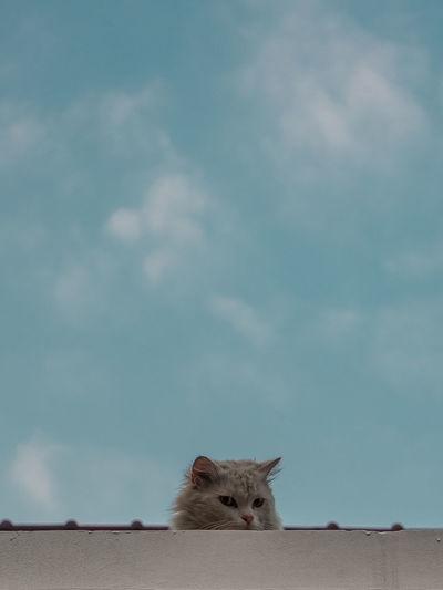 Cat and blue sky