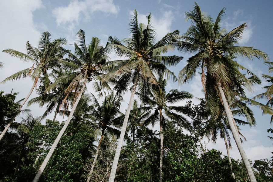wander often Bali Copy Space Green Color Landscape_Collection Palm Tree Rushing Water Travel Photography Tropical Paradise Wanderlust Background Image Beauty In Nature Coconut Tree Day Exotic Destination Fern Leaf Fern Plant Greenery Nature No People Plant River Tropical Climate