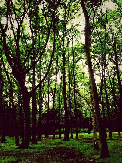 Forest Sky Green Green Grass