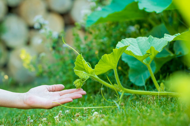 Cropped image of person holding plant leaves on field