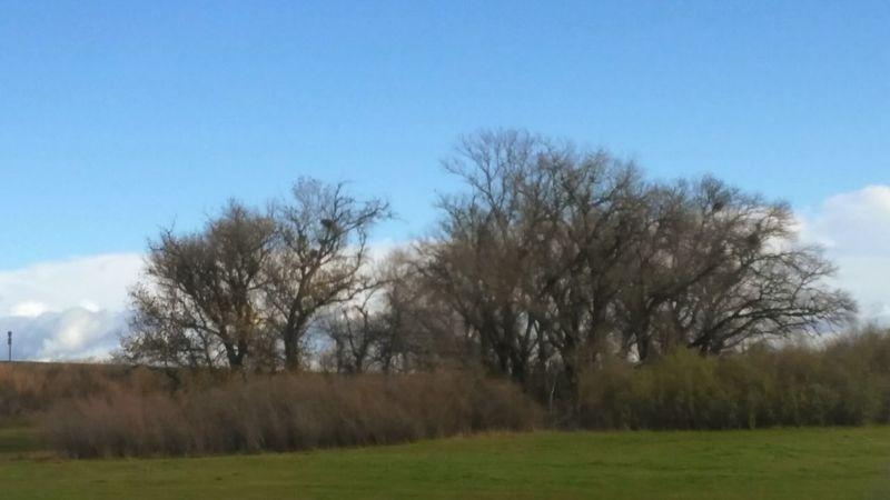 Norcal Taking Photos Enjoying Life Sacramento Valley Cali Life Trees And Sky