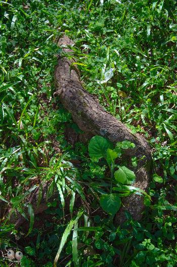 Arte Natural Photography Green Victornatureza Natureza Photoart Verde Fotografia Terra  Phtographydocumentary Olharnatural Vitaonatureza Fotografiaéarte Nature