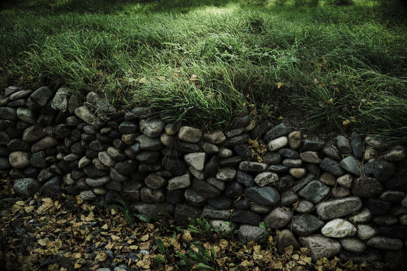 Abundance Backgrounds Full Frame No People Nature Green Color Day Close-up Outdoors Beauty In Nature Plant Stones And Plants Stone Stones Composition Stones And Natur Grass Green Theme Nature Themes Wood Photography Green Plants Heat - Temperature Sunny Day Sunny Sunlight