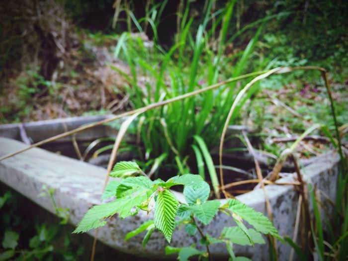 Nature Plant Green Color Outdoors Beauty In Nature First Eyeem Photo