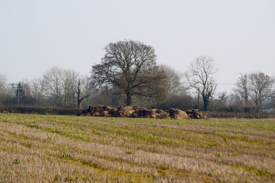 Taking Photos Relaxing Country Shots Countryside Uk Trees Hedges Contrast Nikond3300