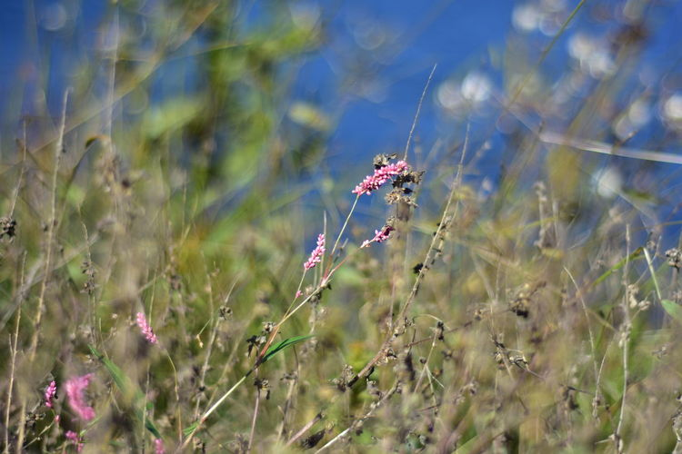 Plant Growth Nature Land Flower Field Selective Focus Beauty In Nature Day No People Flowering Plant Close-up Fragility Animal Sunlight Outdoors Freshness Animal Themes Vulnerability  One Animal Purple