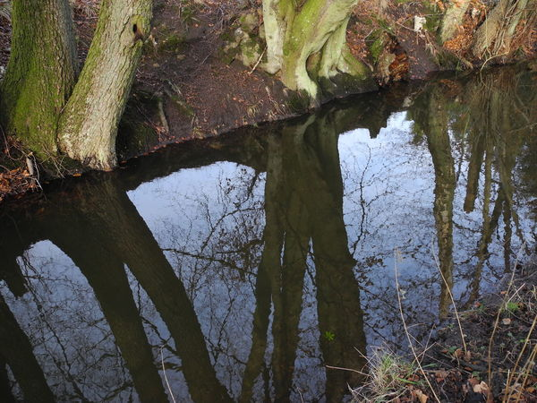 Tree Nature Water Growth Reflection No People Sky Beauty In Nature Outdoors Day Close-up - in The Danish Countryside