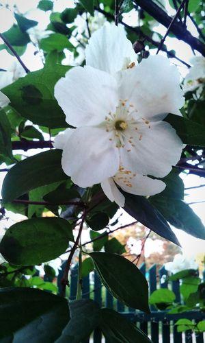 Природа природароссии красота💕🌸🌹 цветы весна Весна💐🌷🌿 солнце тепло таетлёд First Eyeem Photo