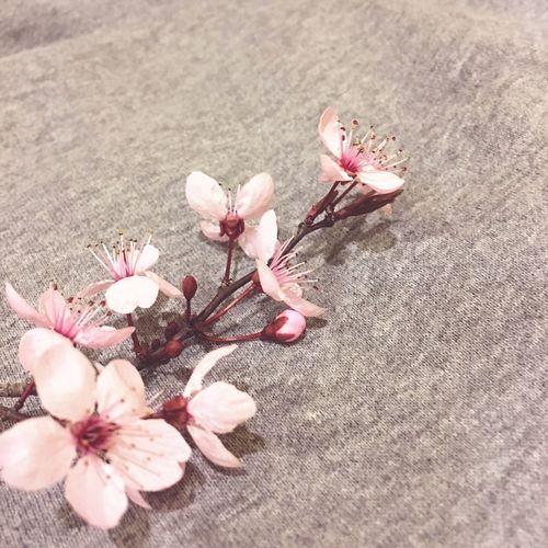 Pastel Power IPhoneography IPhone IPhone Photography EyeEm EyeEm Best Shots IPhone 6s+ Art Nature Flowers