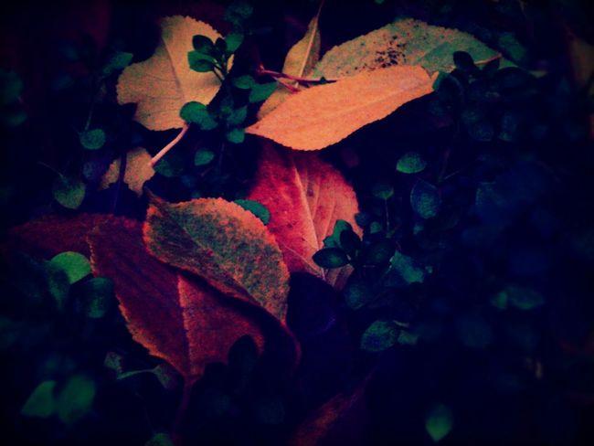 autumn is ending🍂🍁🍂🍁 Taking Photos Dushanbe city