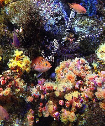 魚 海 カラフル Colorful イソギンチャク Fish Sea 熱帯魚
