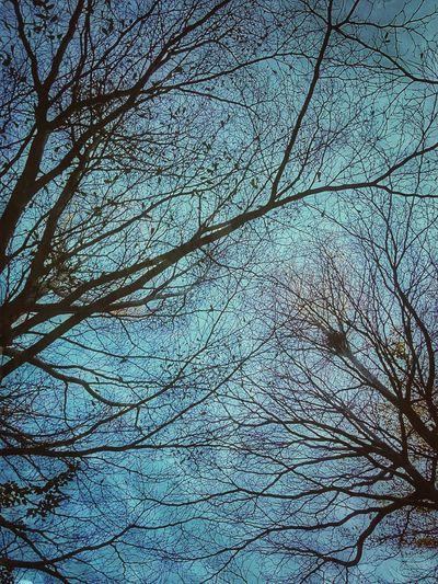 Tree Tree Photography Tree_collection  Tree View Tree Colors Color Of Tree Colorful Tree Beauty Of Tree Beautiful Tree