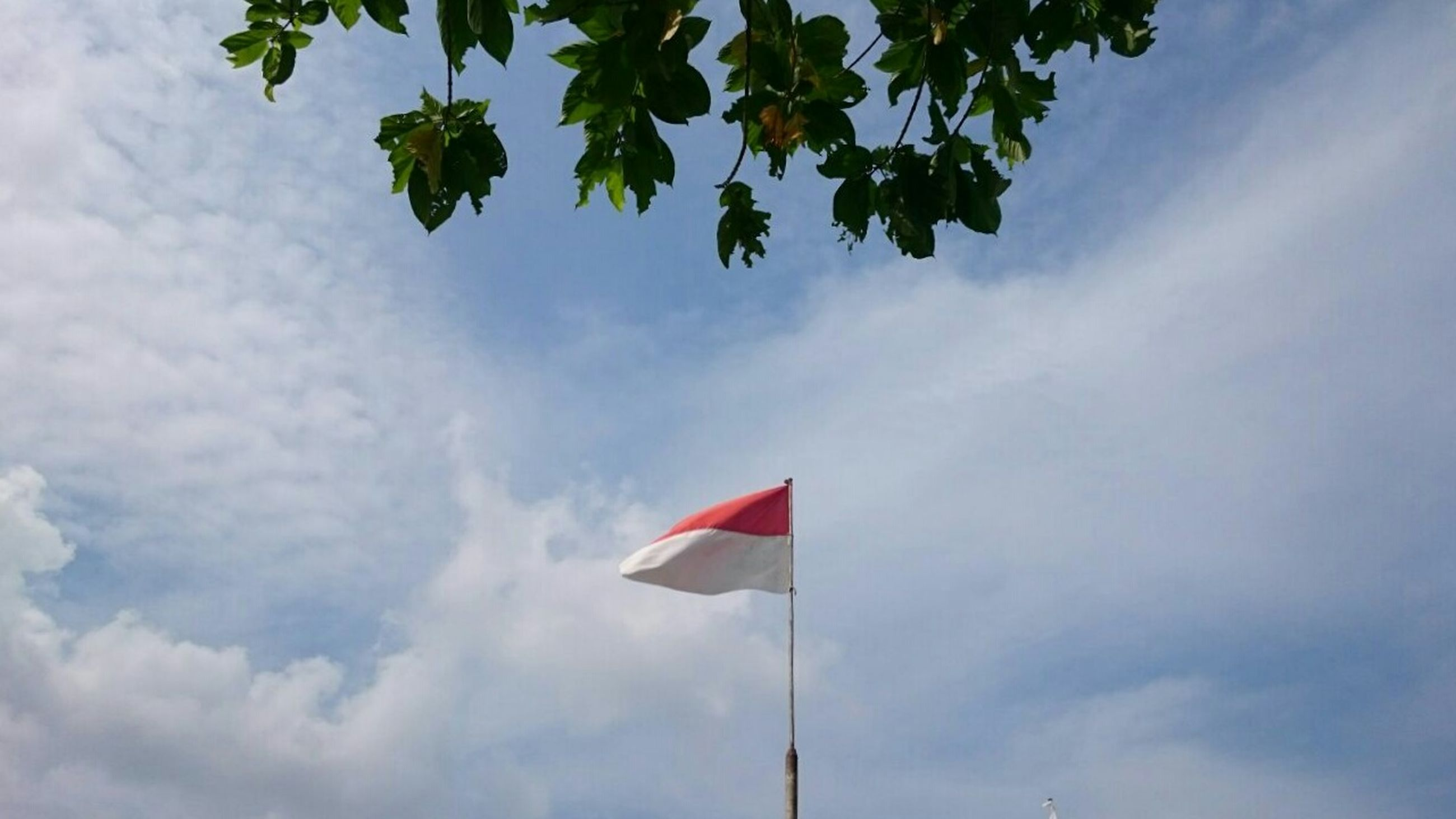 low angle view, flag, sky, patriotism, identity, national flag, cloud - sky, american flag, cloud, tree, cloudy, pole, red, wind, day, pride, no people, outdoors, nature, blue