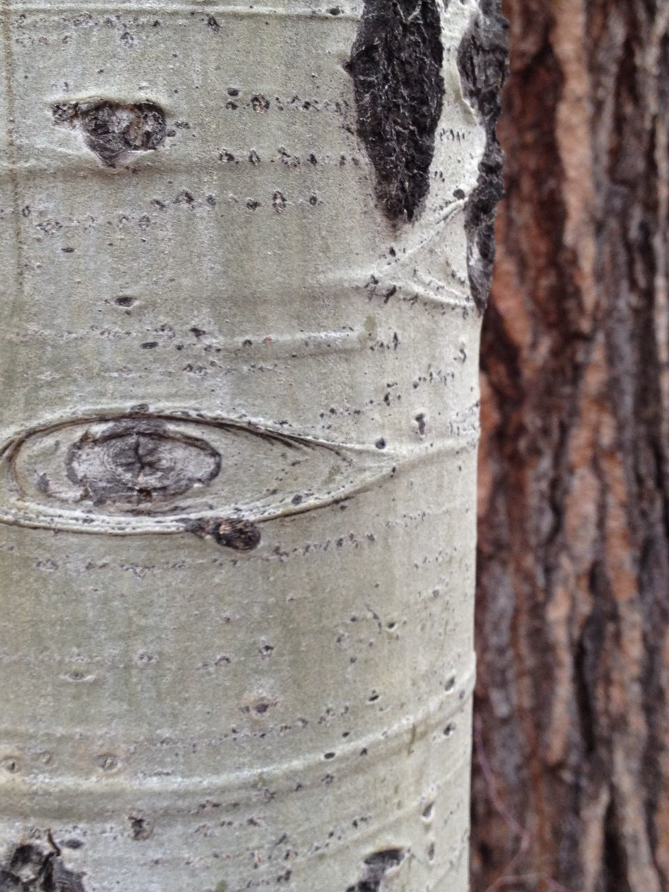textured, tree trunk, close-up, no people, day, outdoors, full frame, backgrounds, nature, tree