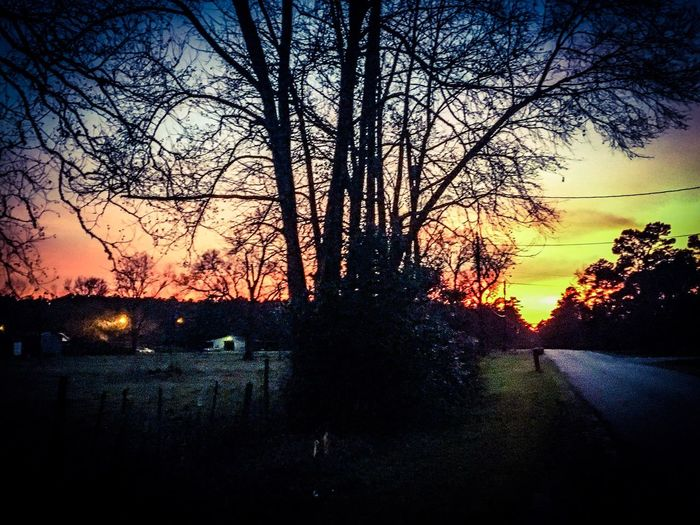 Tree Sunset Sunset Sky Nature Bare Tree Outdoors Road No People Tree Beauty In Nature Night Sky Country Country Road
