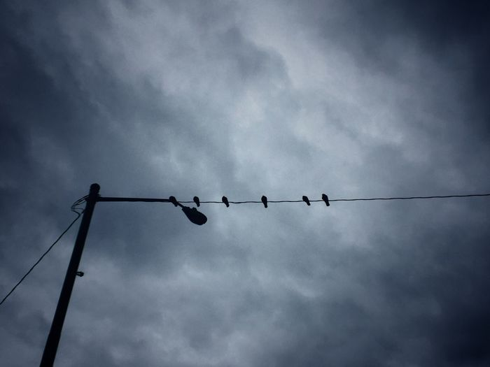 Adapted To The City Birds Pole Electric Wire City City Life Birds On A Wire Dark Sky Dark Skies Lookingup Look Up