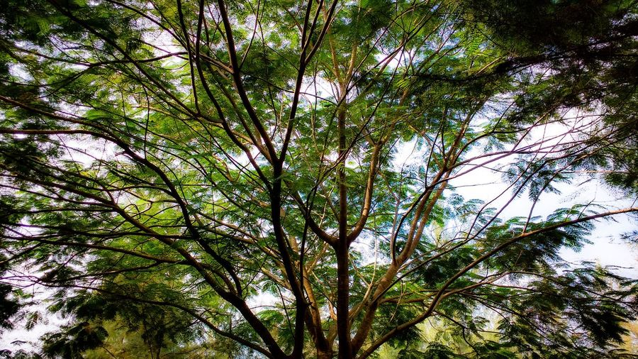 Tree Low Angle View Beauty In Nature Outdoors Tranquility Forest No People Branch Green Color Day