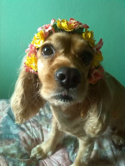 Animal Themes Close-up Day Dog Domestic Animals Flower Indoors  Pets Portrait