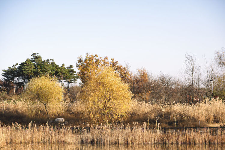 Autumn Beauty In Nature Clear Sky Day Field Grass Growth Korea Landscape Mammal Nature No People Outdoors Rural Scene Scenics Sky Tranquil Scene Tranquility Tree