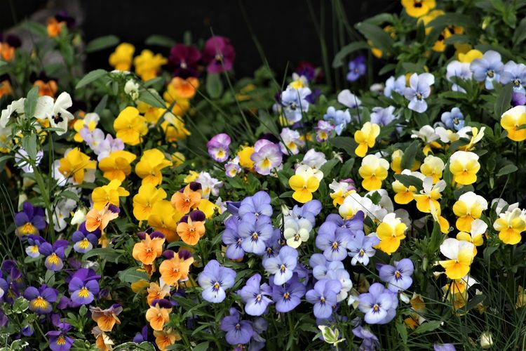 Plant Flower Flowering Plant Beauty In Nature Growth Flower Head Freshness Petal Close-up Inflorescence Fragility Vulnerability  Nature No People Day Outdoors Purple Flower Photography Blütenzauber Colorful Backgrounds Hintergrundbilder