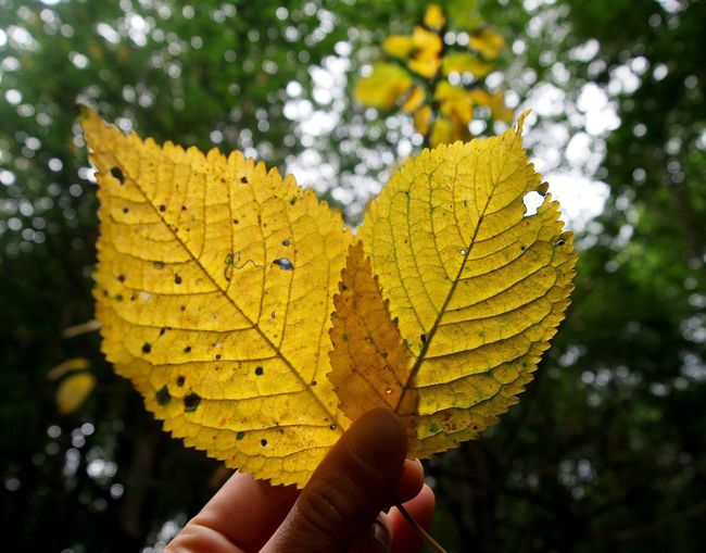 Two Is Better Than One 💛 Leaf Heart Yellow OlympusPEN